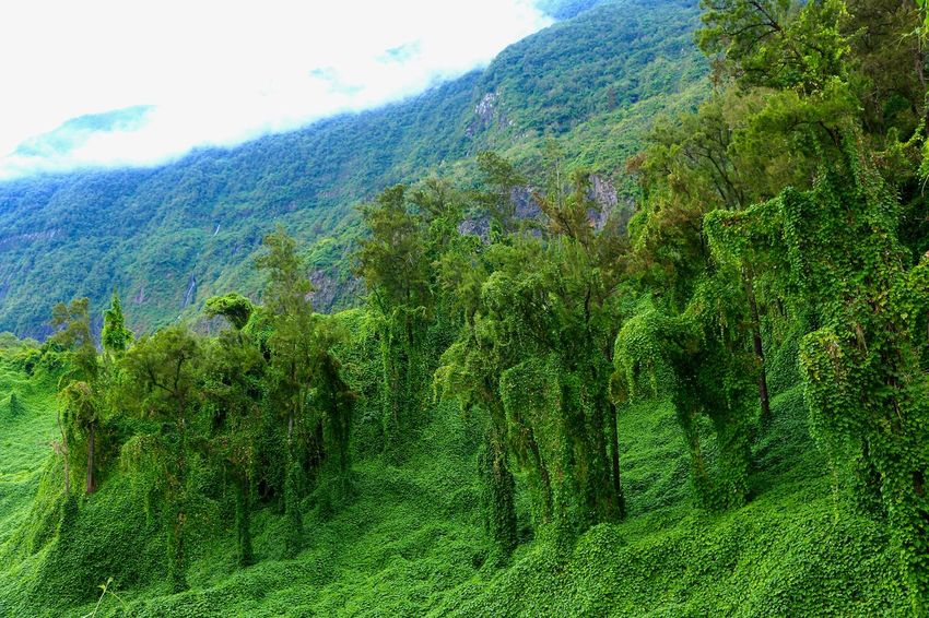 EyEmNewHere Reunion Island Beauty In Nature Day Eyem Best Shots Eyem Nature Lovers  Forest Green Color Growth Idyllic Landscape Lush Foliage Mountain Nature Naturelover No People Outdoors Plant Scenics Sky Tranquil Scene Tranquility Tree