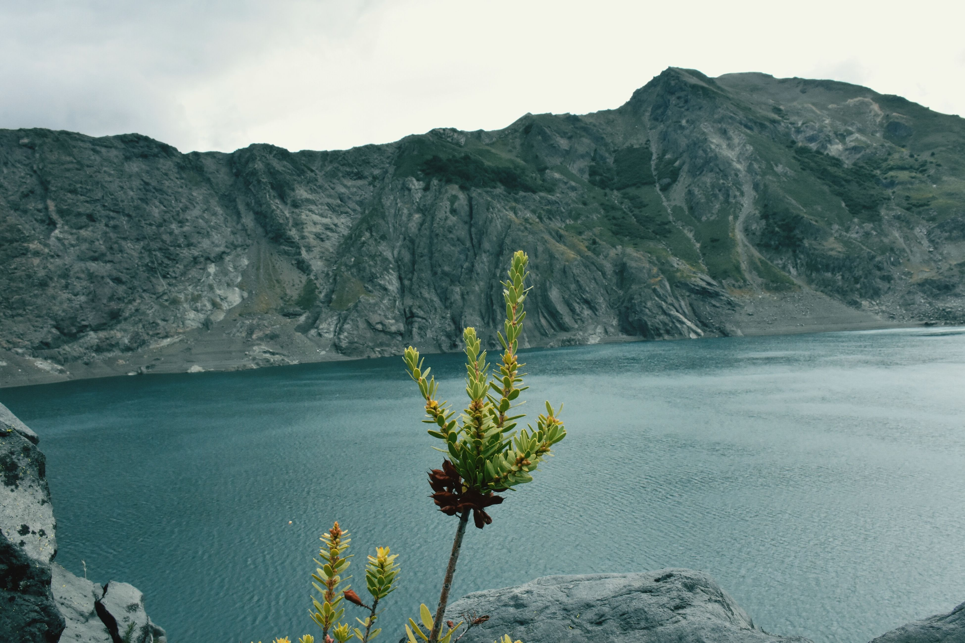 beauty in nature, flower, mountain, water, nature, growth, plant, outdoors, no people, day, lake, tranquil scene, scenics, sky, freshness, tranquility, landscape