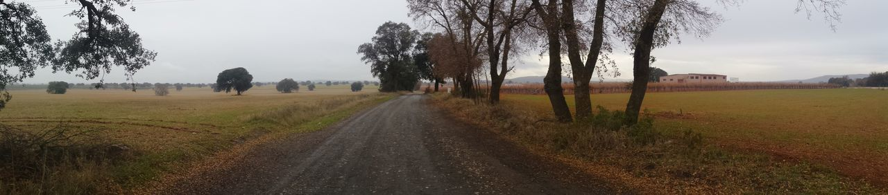 Ciudad Real Beauty In Nature Castellar De Santiago Day Fog Grass Landscape Nature No People Outdoors Road Rural Scene Scenics Sky The Way Forward Tree