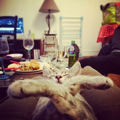 Have you met Max? Cute Cats Cats Relaxing EyeEm Animal Lover Sleeping