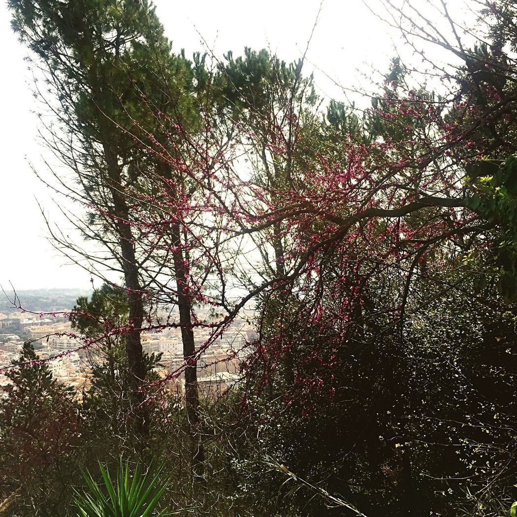 Hello World Relaxing Enjoying Life Walking Around Taking Photos In Love With My City Sunbathing Spring Spring Flowers Rome 🌾🍃🌸