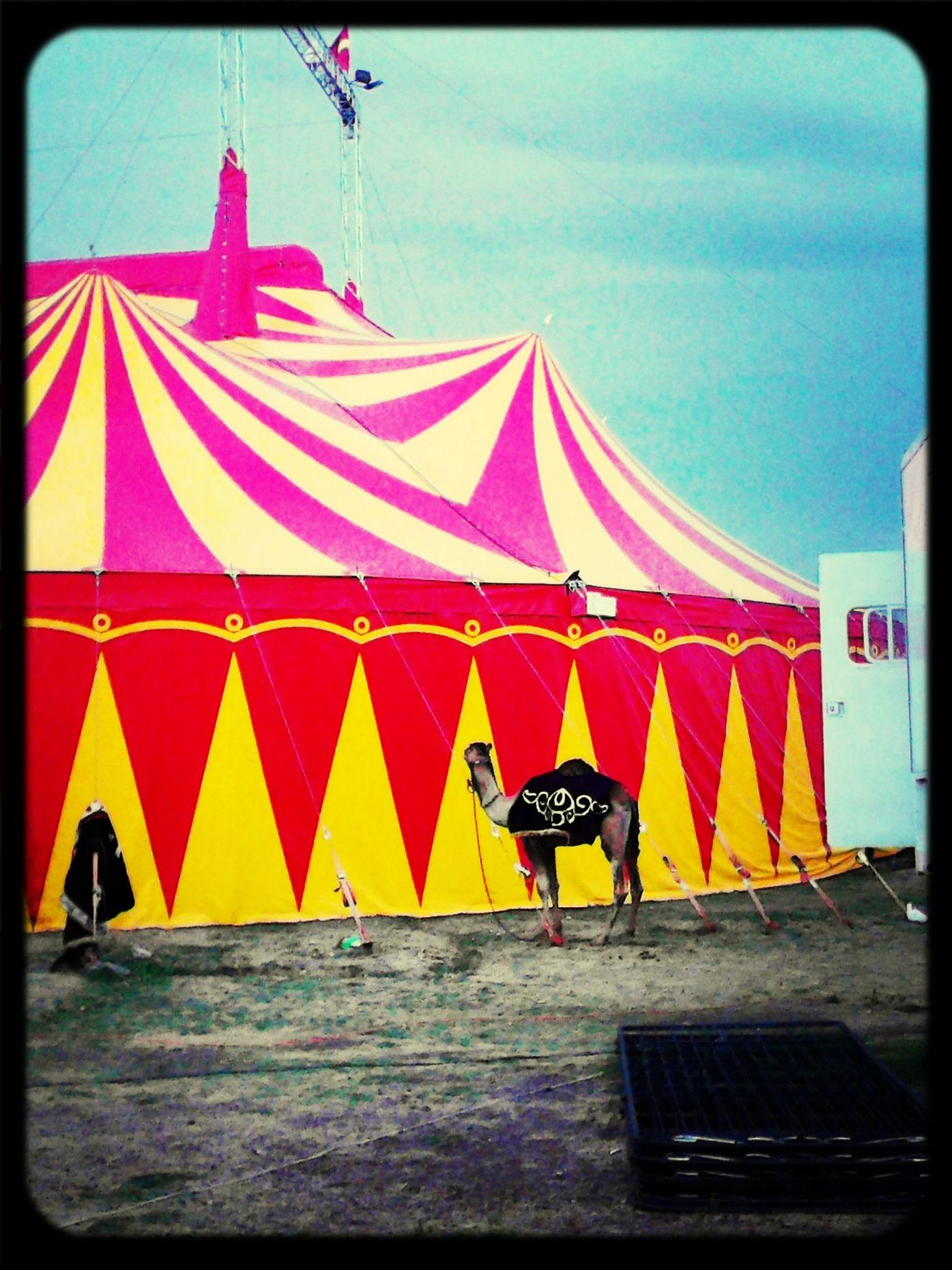 Circo Union, me gusta que pronto ya no habra animales en los circos. Urban Geometry Guadalajara Jalisco