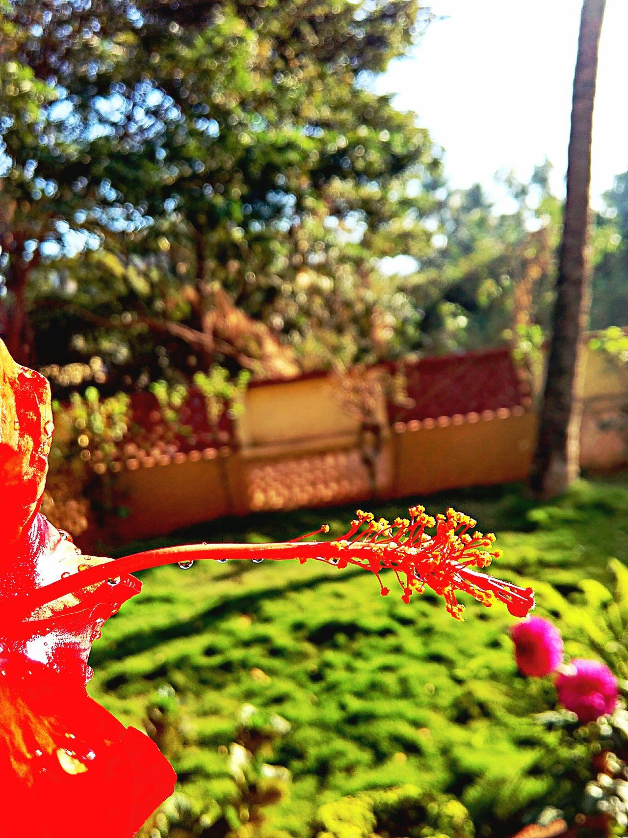 Pastel Power LOVE FLOWERS