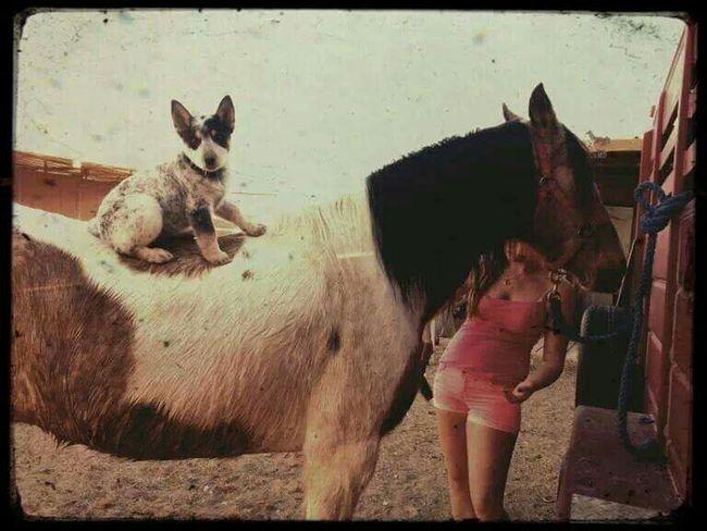 Horse Dog Puppy Healer Paint TRIGGER Summer Enjoying Life Awww Cute
