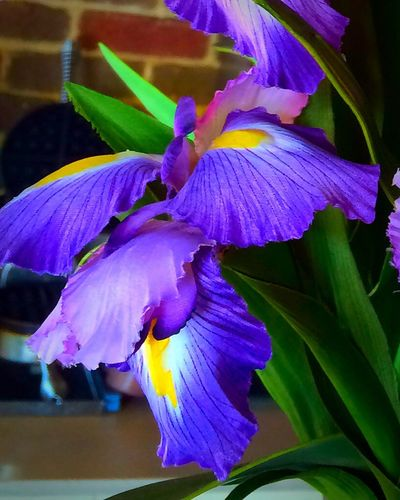 Winter Flower  Flower Collection Purple Flower Loving Flowers good evening everyone ! Purple Obsession