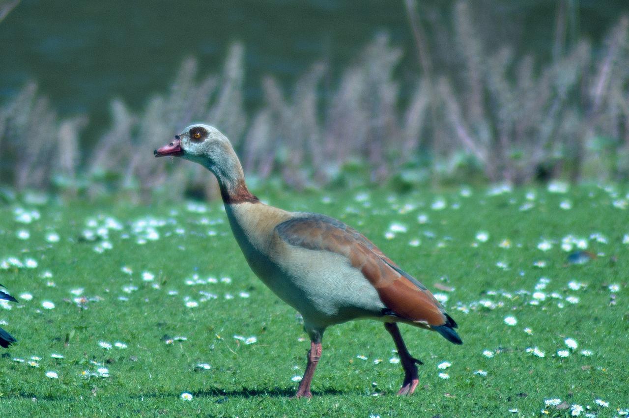 Beautiful stock photos of peacock,  Animal Themes,  Animal Wildlife,  Animals In The Wild,  Close-Up