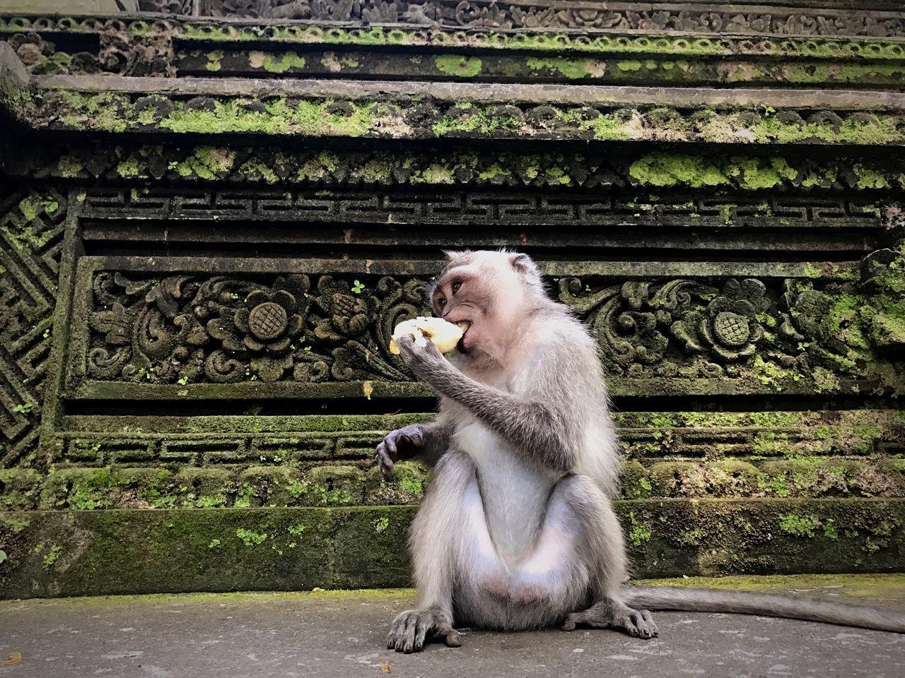 Monkey forest, ubud Monkey One Animal Sitting Side View Animal Themes Travel Destinations Beauty In Nature Ubud Photography INDONESIA Bali Primate MonkeyForest