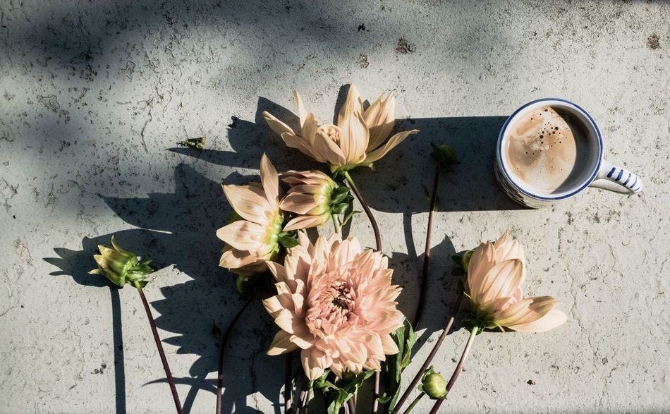 Beautiful stock photos of coffee, flower, table, coffee cup, directly above