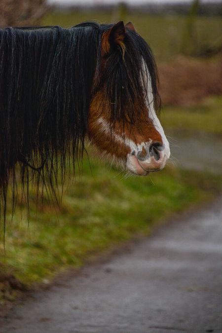 Welsh Mountain Ponies Brechfa Common Brecon Beacons Brecon Beacons National Park Brecon Breconbeacons Equine Photography Equinephotography Equines Of Eye Em Welsh Mountain Ponies Welsh Mountain Pony Welshmountainpony