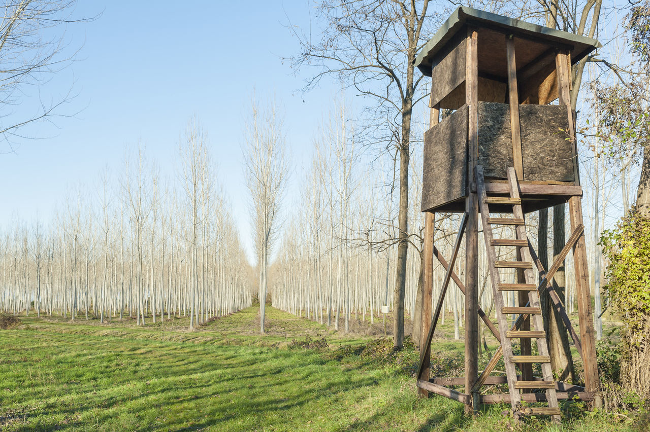 Beautiful stock photos of jagd, tree, built structure, nature, no people
