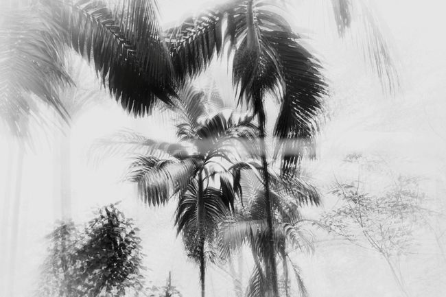 Fringy black and white.. Spider Web Nature On Your Doorstep The Week On EyeEm Sun Sunlight Black And White Plant Fringy Fringing Palm Tree Tree Low Angle View Tree Trunk Sky Nature Growth Day Beauty In Nature Outdoors No People Close-up
