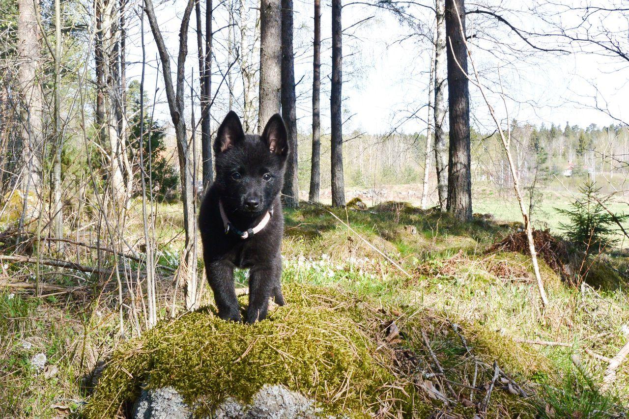 Beautiful stock photos of german shepherd,  Animal Themes,  Day,  Dog,  German Shepherd