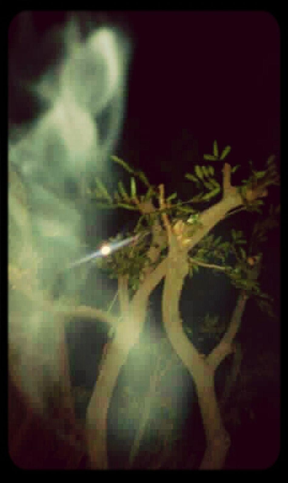 Paranormal,