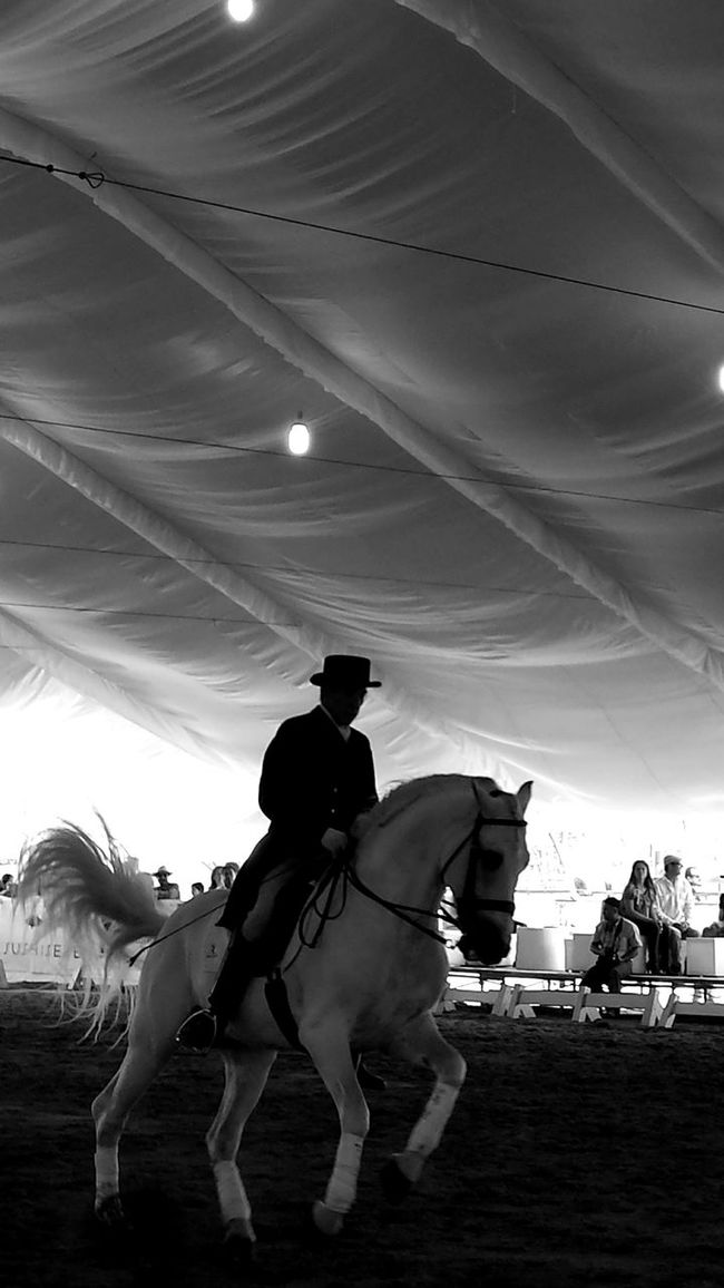 Arts Culture And Entertainment City Life Enjoyment Extreme Sports Horse Horse Show Outdoors Outline Performance Sky