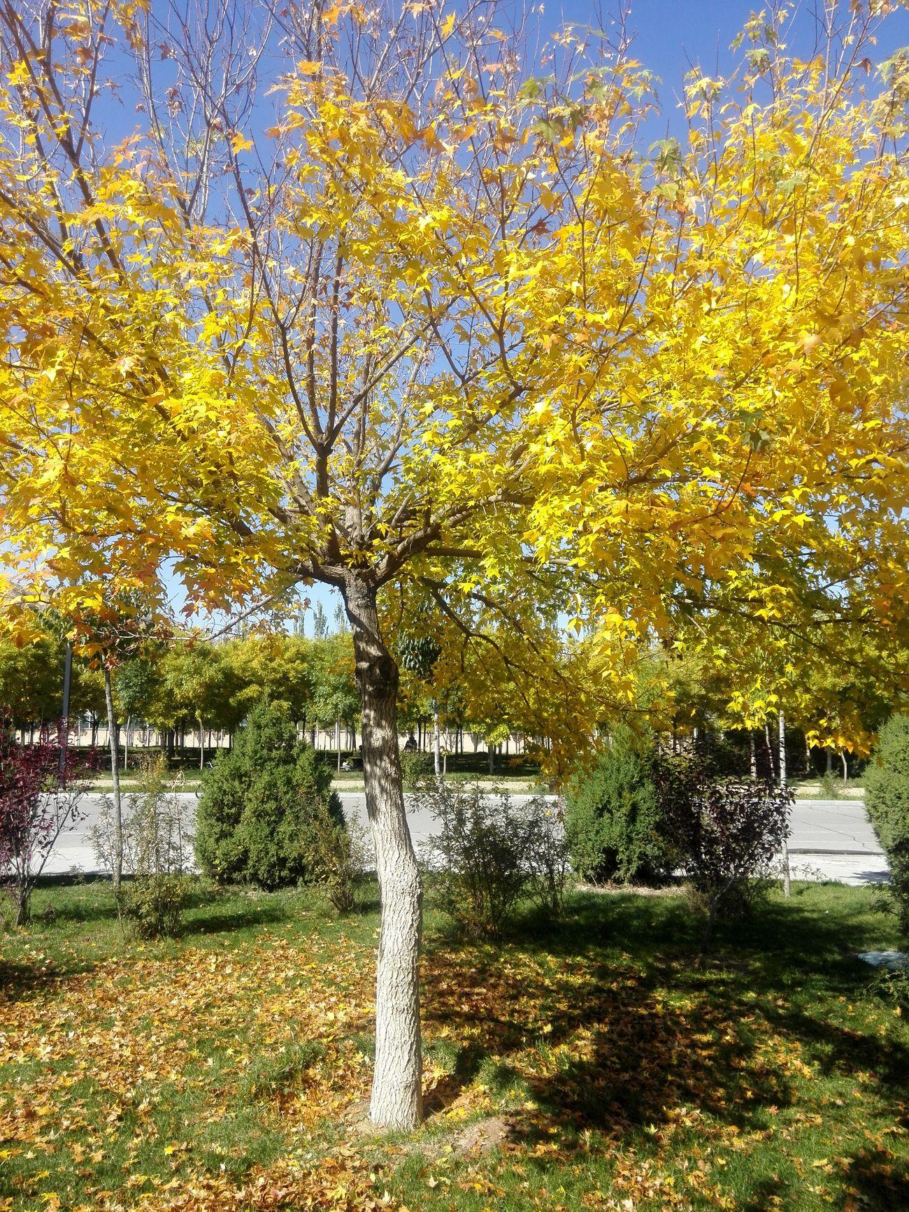 校园 秋色