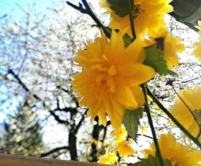 Spring 😊☀ Spring Nature Naturelovers Flower