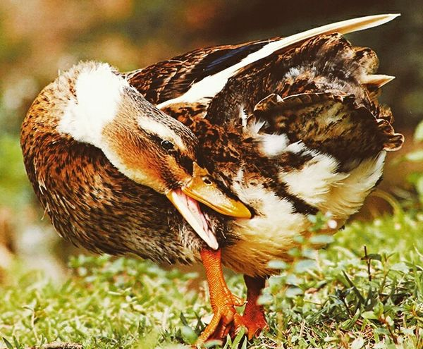 Animals In The Wild Animal Themes Nature Fresh On Eyeem