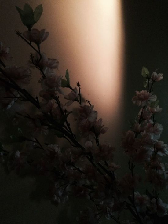 Sakura Light And Shadow Flowers MyPhotography Iphonegraphy 📱💕