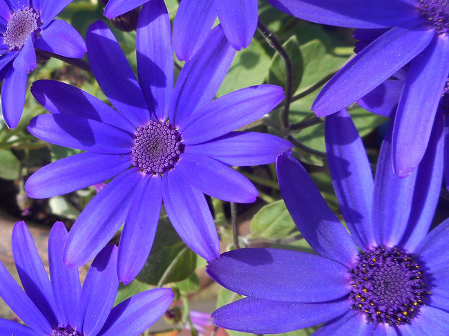Backgrounds Beauty In Nature Blooming Close-up Day Detail Flower Flower Head Fragility Freshness In Bloom Outdoors Petal Plant Purple Symmetry In Nature Vivid Colours