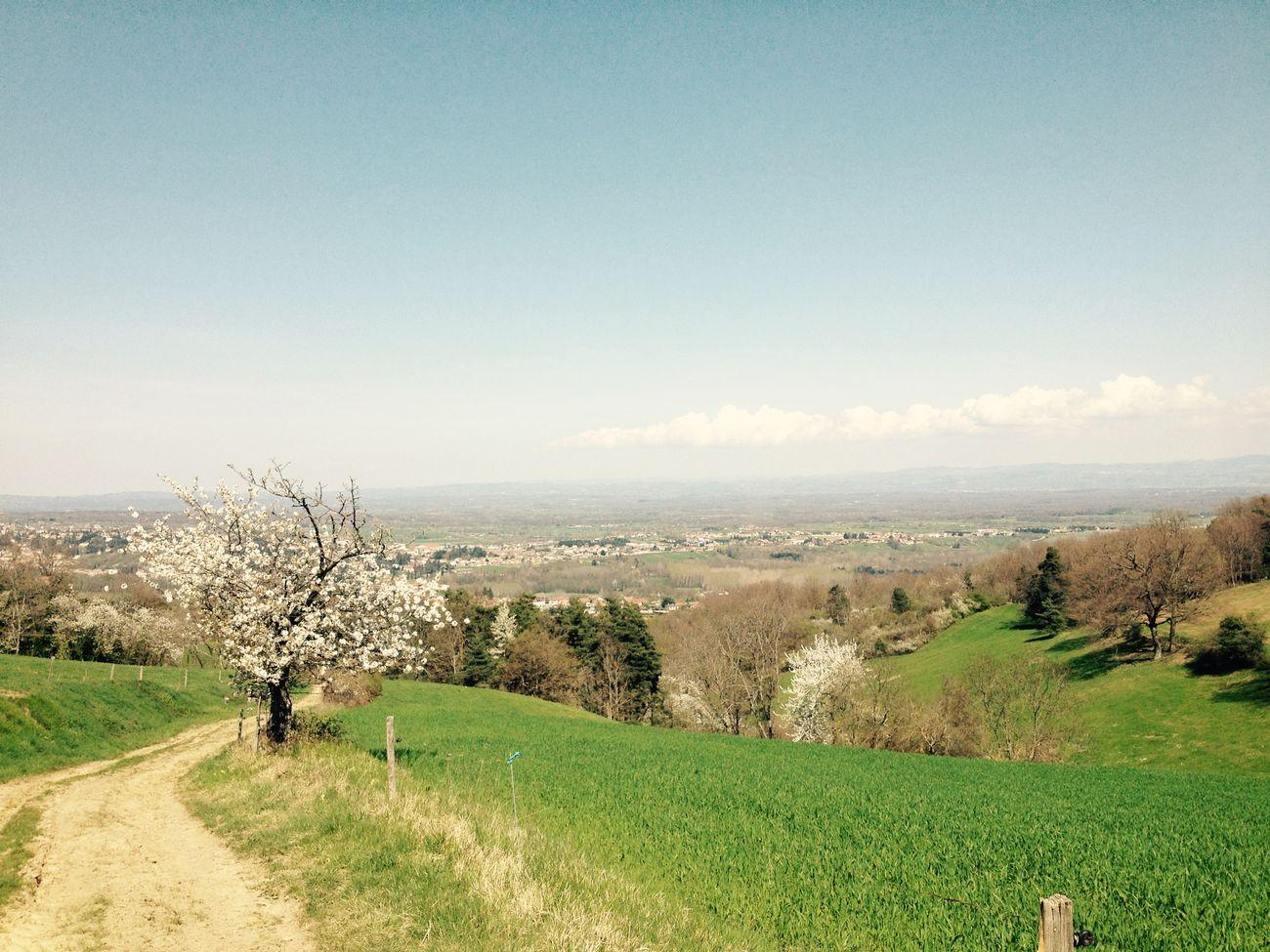 Spring Landscape Paysage