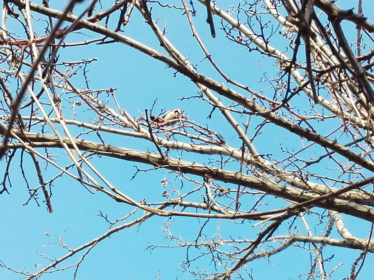 Low Angle View Tree Blue Branch Nature Sky No People Close-up Outdoors Beauty In Nature Bare Tree Woodpecker In Tree Showcase: January Edited By @wolfzuachis Showcase: 2017 @WOLFZUACHiV Veronicaionita Eyeem Market Huaweiphotography Wolfzuachiv On Market Woodpecker Bird Woodpecker Bird