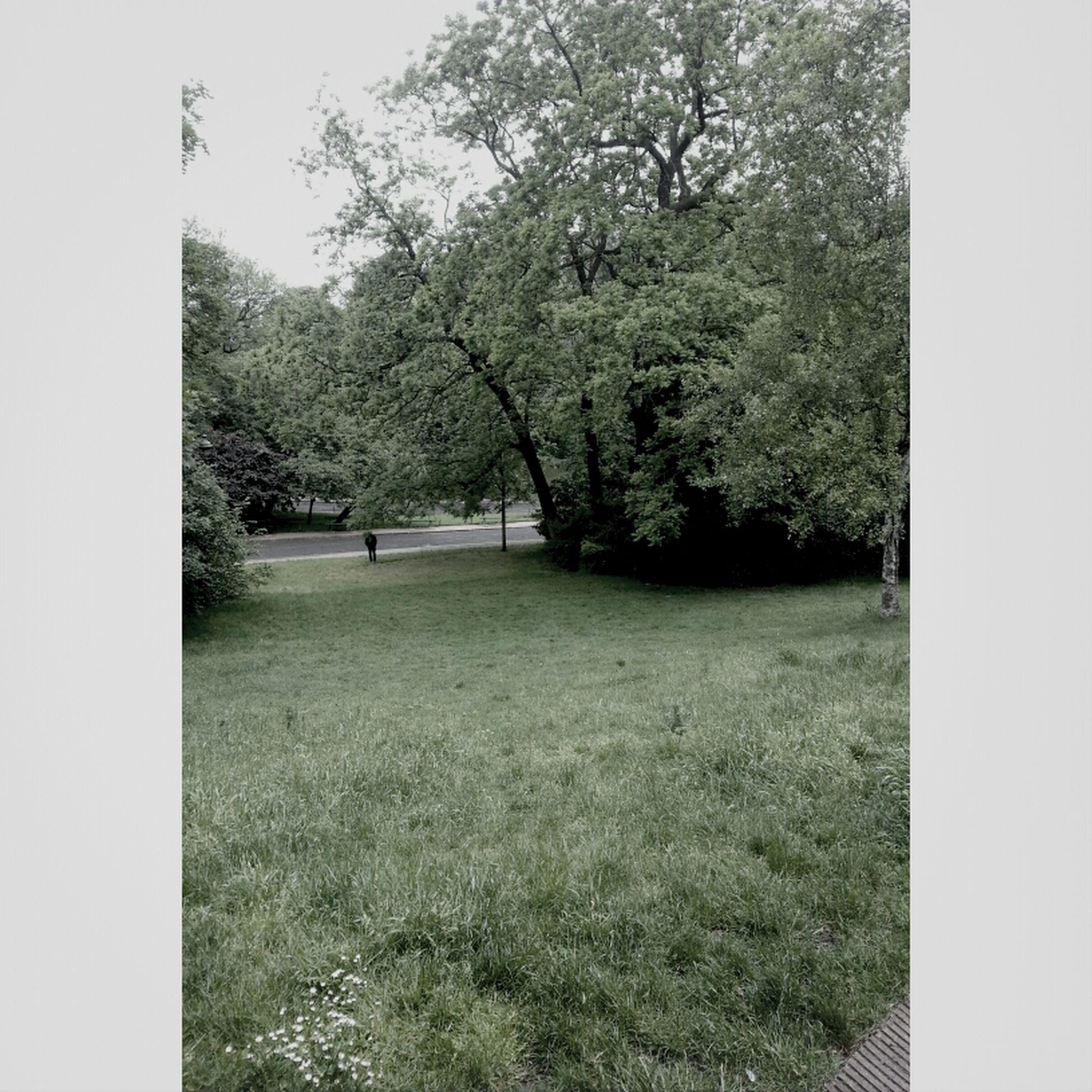 un parc sous la pluie