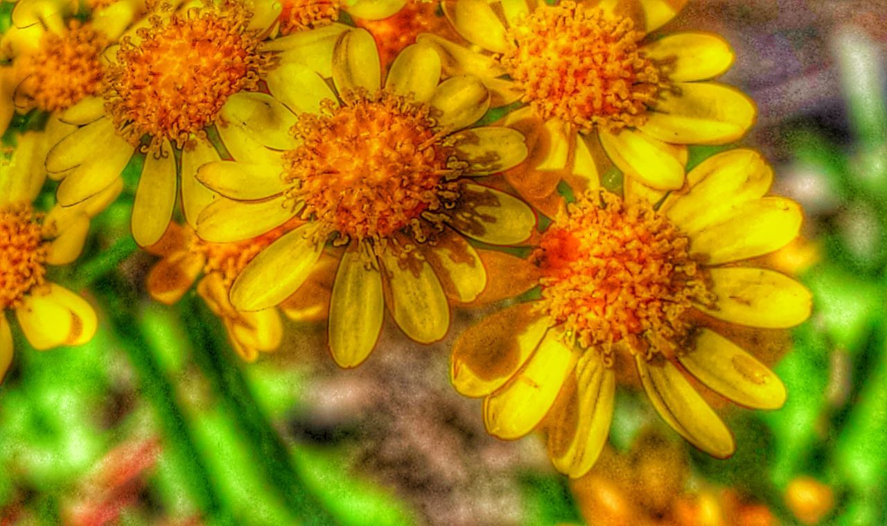 Flowers Close-up Yellow Flower Yellow And Orange first artistic edit Eyeem Meditation Nature Wildflowers Stormwater Park, Sebastian, FL 43 Golden Moments