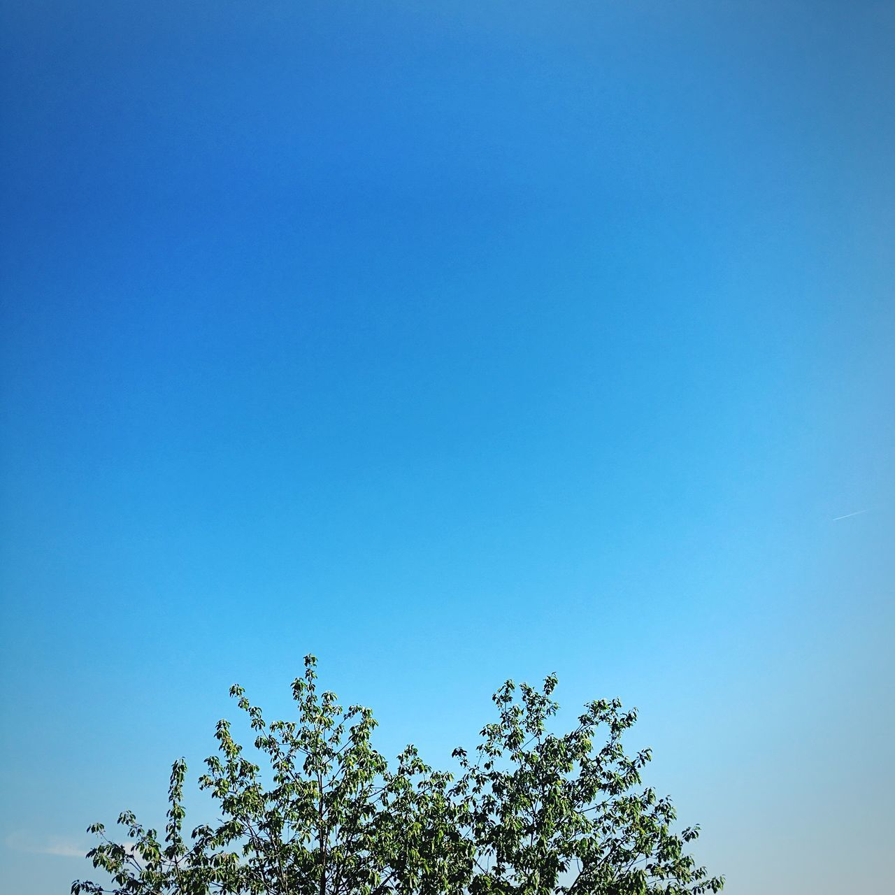 Blue Tree Low Angle View Clear Sky Copy Space Nature Growth Beauty In Nature Day No People Outdoors Tranquility Branch Sky Minimal Minimal Nature