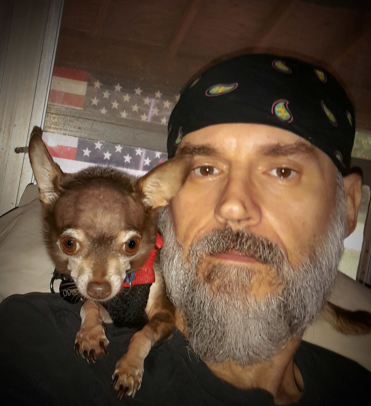 Odie Cu-Jose My Best Friend Chihuahuas<3 Happy Dogs My Dogs Are Cooler Than Your Kids Chihuahua Chihuahua Lovers Pampered Pets Partners In Crime My Life ❤ Casa De Albatross Fellsmere, Florida USA King Of The Hill