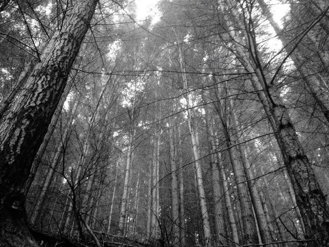 Bushwalking Black And White Forest Bush IPhoneography IPhone4s Chilly in Mountain Nature_collection Silence Hiking