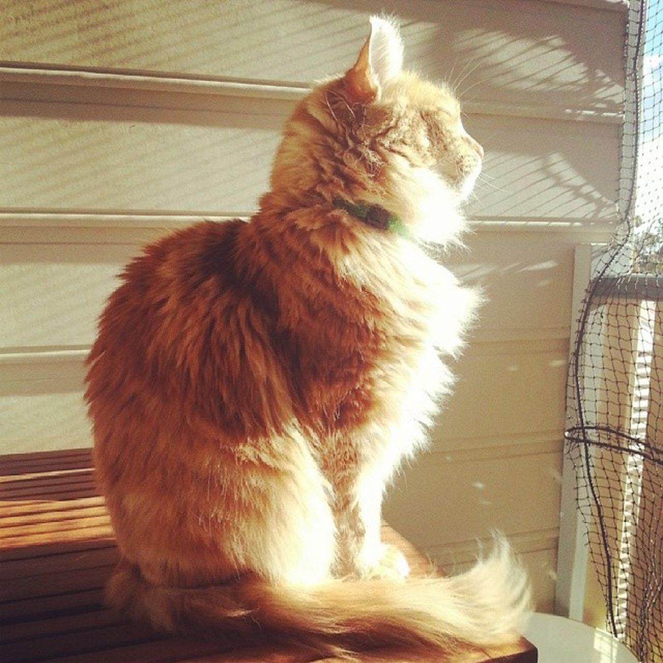 Jaffa aka Mrmcbitey has found himself a nice spot in the Sunshine too