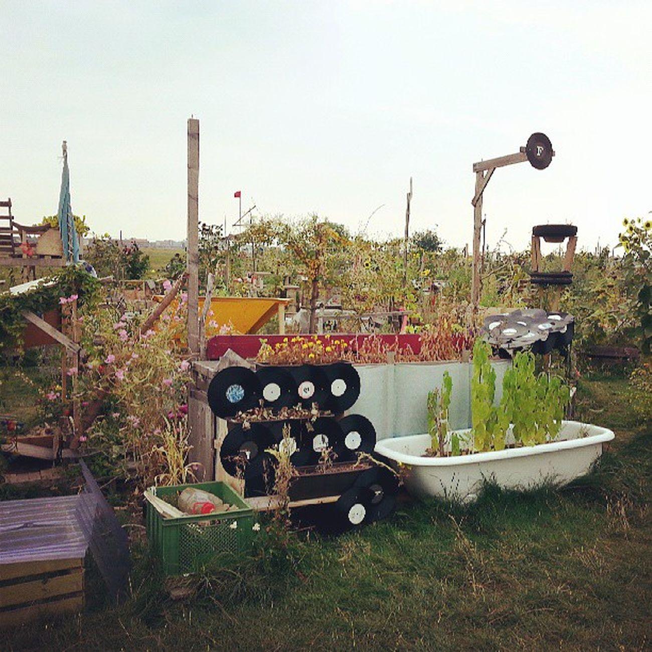 O pessoal pega um pedacinho de terra - disputadíssimo, aliás - e faz dele um jardim. Cada um planta o que quer e, claro, cuida das suas flores. Esse resolveu enfeitar com discos de vinil. Sinto cheiro de bom gosto musical no ar rsrsrs - Tempelhof Flughafen (aeroporto desativado que virou parque) Berlin Berlin2013