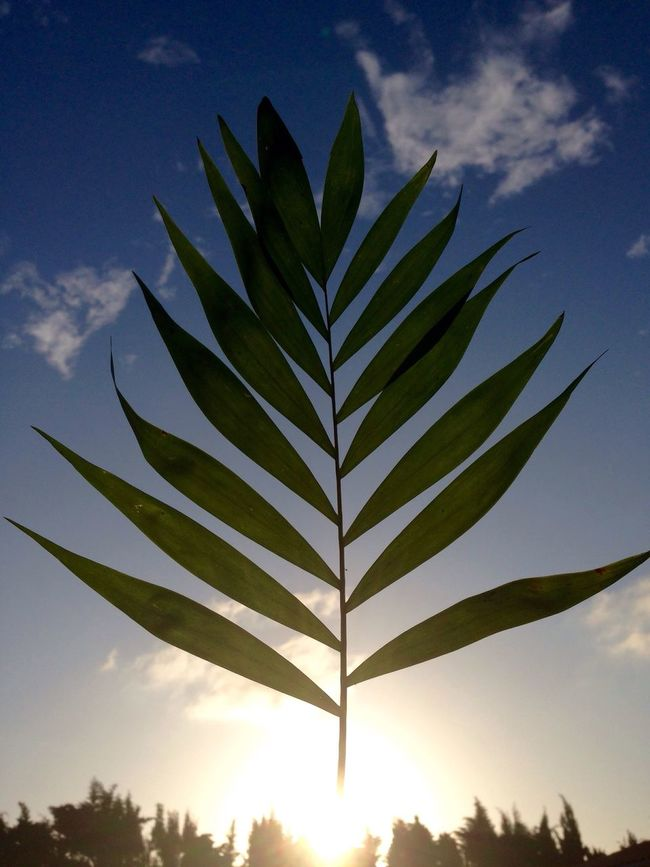 Feuilles Verte Coucher De Soleil Ombre