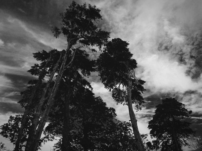 Fine Art Photography Light And Shadow Clouds Black & White Nature Nature Black&white Trees Winter Trees