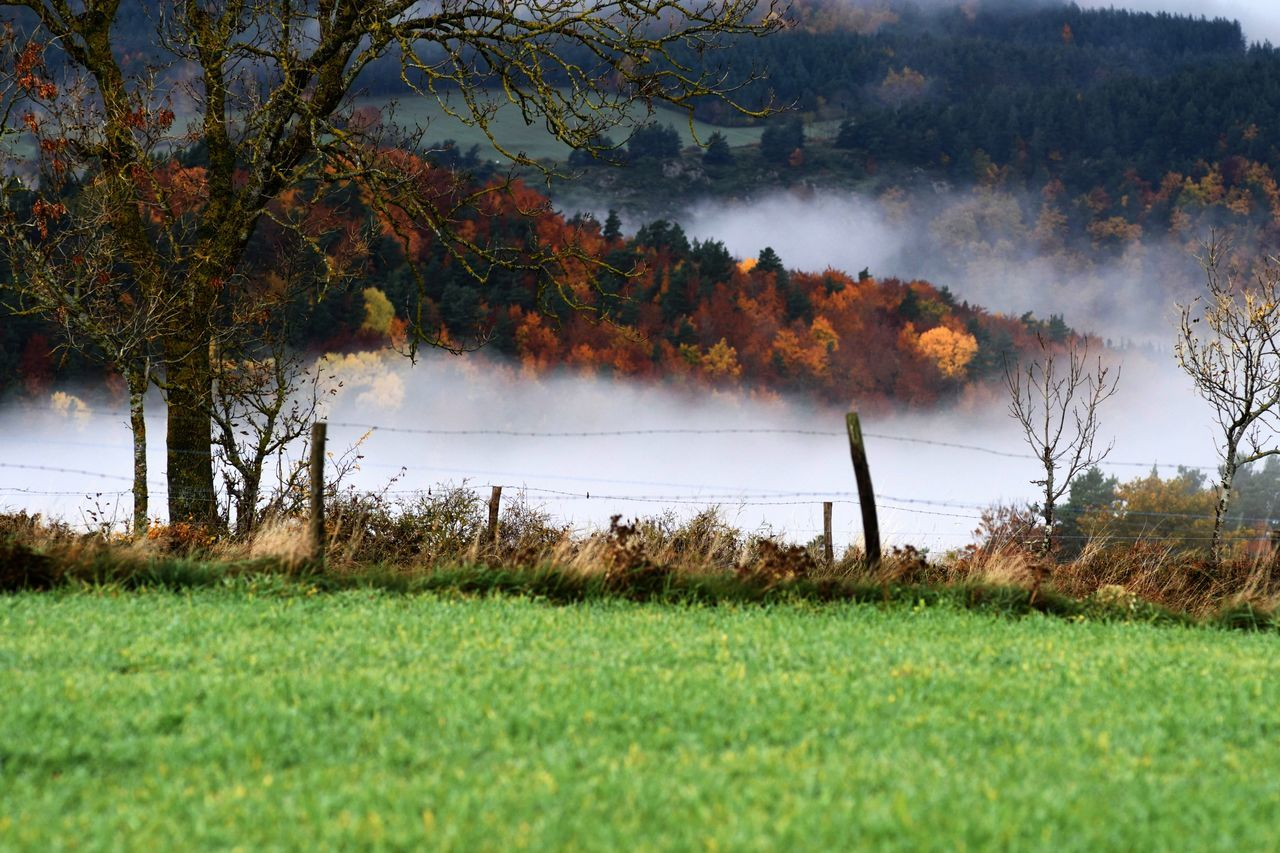 Autumn Colors Auvergne France Beauty In Nature Center Of France Contrast Of Colors Countryside Life Framing The View Grass Green Color Mist Nature Tranquility Tree
