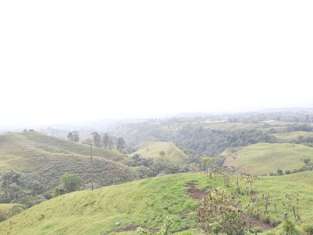 Growth Rural Scene Agriculture Beauty In Nature Tranquil Scene Eje Cafetero In Colombia Live In Colombia Eje Cafetero Filandia Colombia Beauty In Nature Nature Butterfly Beautiful Nature Travel Destinations Paisaje Colombiano Agriculture Natural