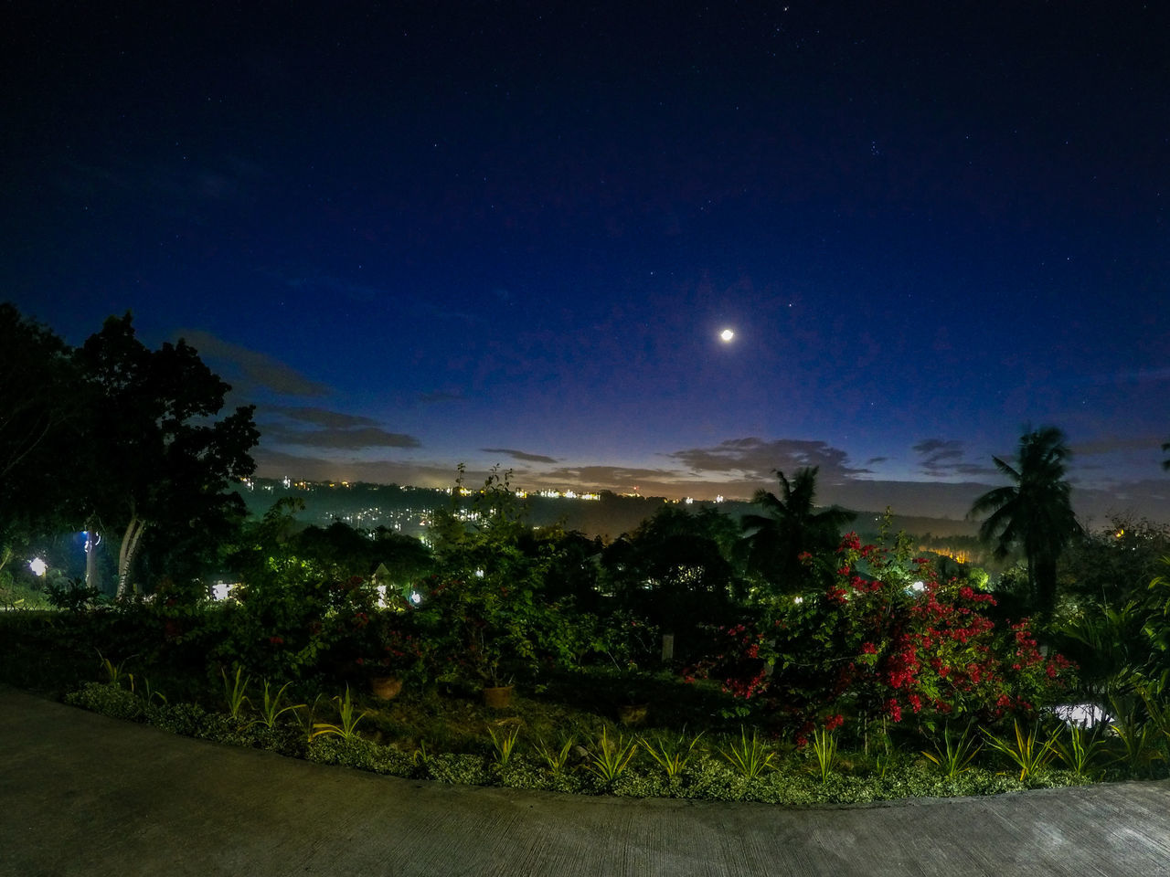 night, moon, illuminated, no people, nature, tree, beauty in nature, plant, outdoors, sky, growth, flower, astronomy