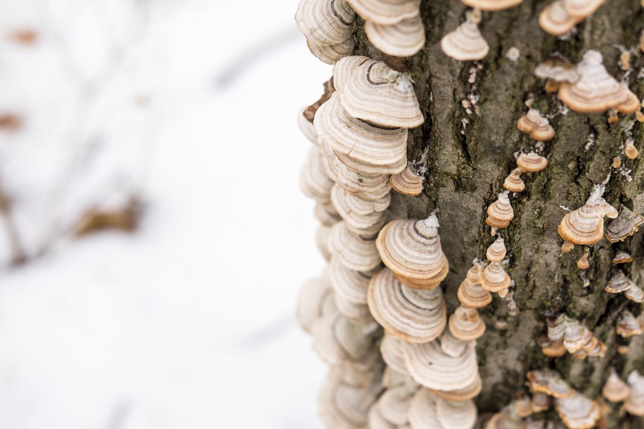 Beauty In Nature Close-up Day Fujifilm FUJIFILM X-T1 Fujifilm_xseries Mushroom Nature No People Outdoors Snow Tree White Winter Minimalism EyeEm Nature Lover EyeEm Best Shots Cold Temperature Tranquility Weather Landscape The Great Outdoors - 2017 EyeEm Awards