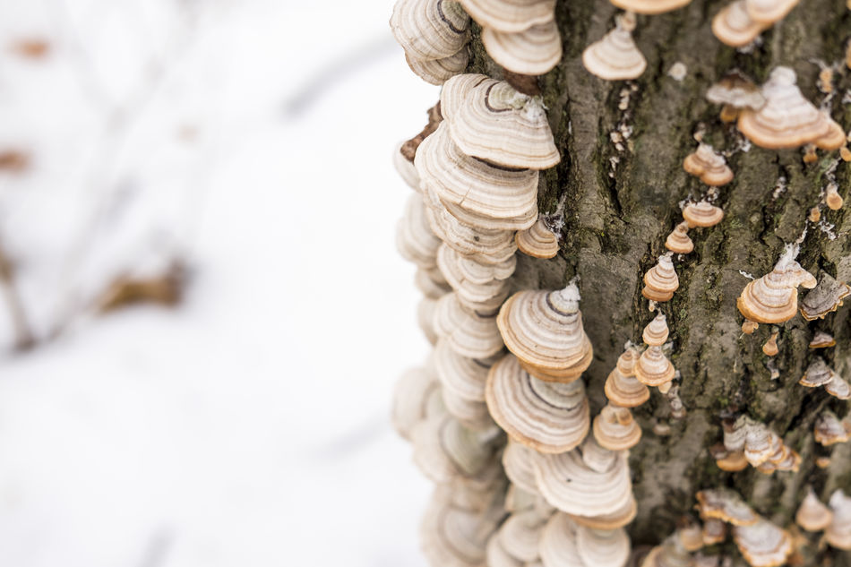 Beauty In Nature Close-up Day Fujifilm FUJIFILM X-T1 Fujifilm_xseries Mushroom Nature No People Outdoors Snow Tree White Winter Minimalism EyeEm Nature Lover EyeEm Best Shots Cold Temperature Tranquility Weather Landscape