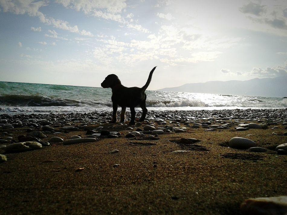 Bu barınaktan aldığımız oğlumuz Gölge. 🐶🐾 Beach Sky Sea Outdoors Mammal No People Pets Dog Animal Themes Sand Turkey Eyeempetslover Köpek Deniz Animals Sağlık HERO Good Pet Photography  Hayvanlar Barınak
