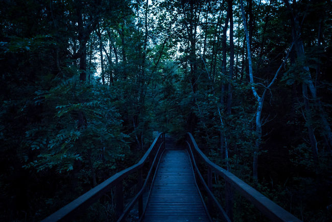 Oasi Fontane Bianche at night Diminishing Perspective Fireflies Fireflies In The Night  Footbridge Mistery Atmosphere Night Night Photography Night View Non Urban Scene Railroad Track Scenics The Way Forward Tranquil Scene Tranquility Tree Vanishing Point Color Palette Pivotal Ideas