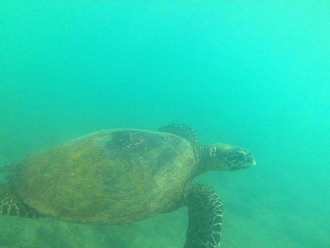 Underwater UnderSea Sea Swimming Water Sea Life Sea Turtle Reptile Beauty In Nature Nature Close-up Snorkeling Photo