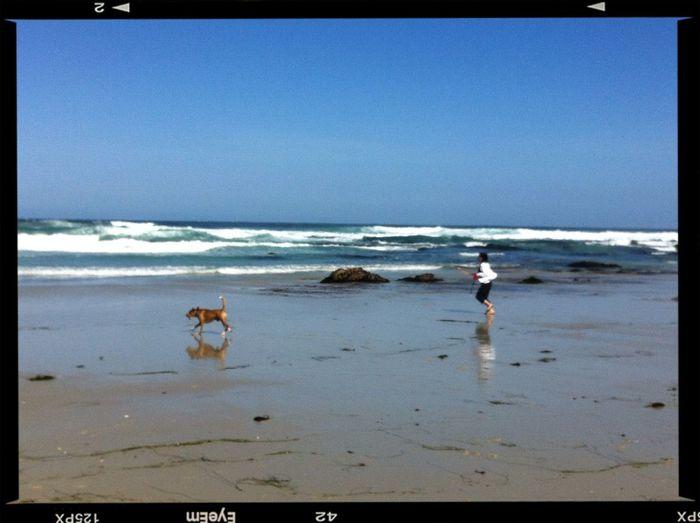 Dog Walking at THE BEACH Dog Walking