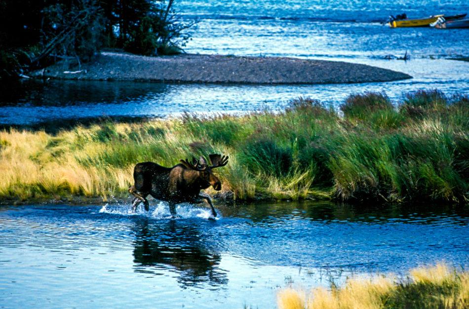 Alaska Alaska Katmai National Park Moose National Park