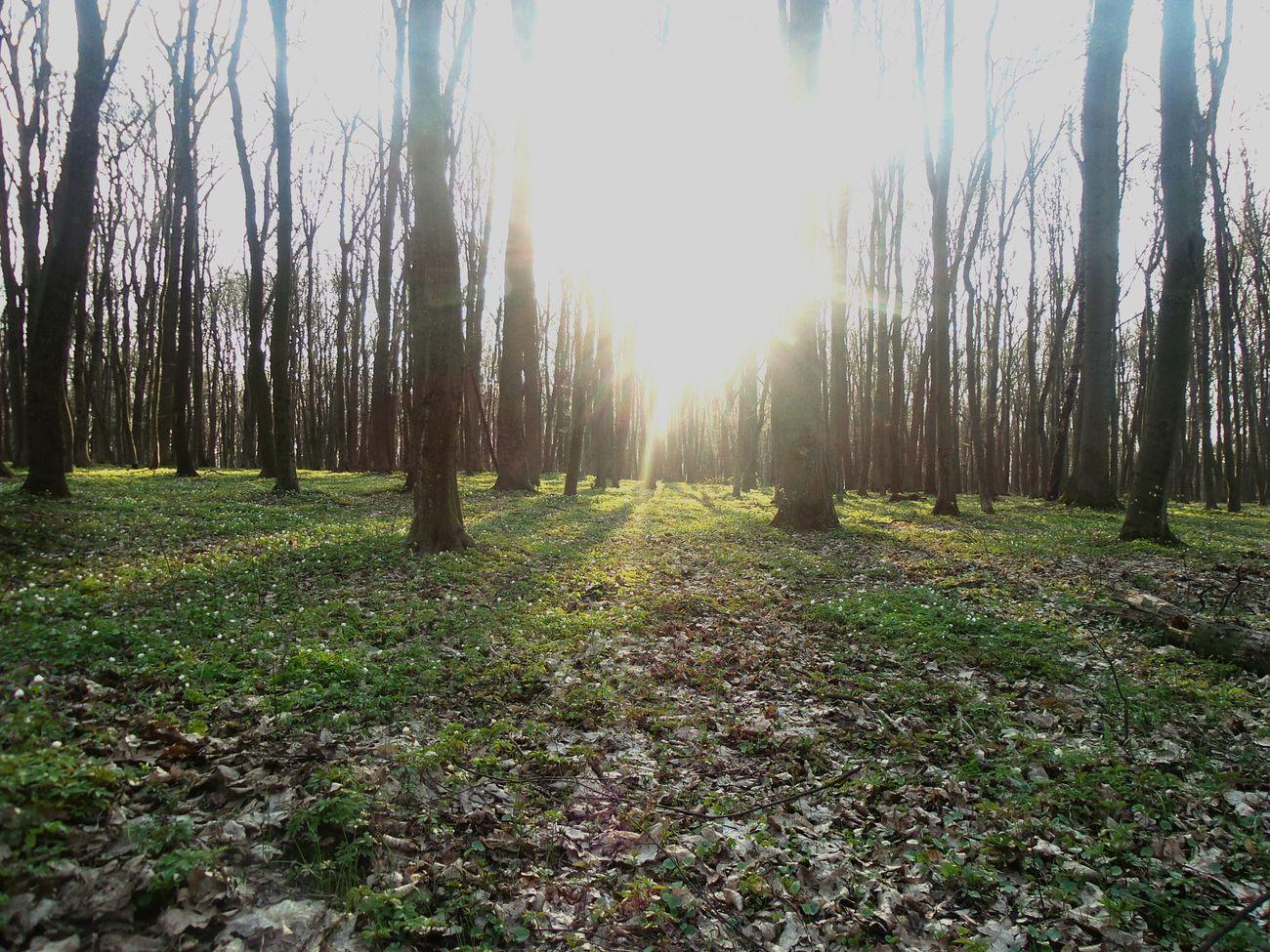LvivUkraine Syhiv Forest