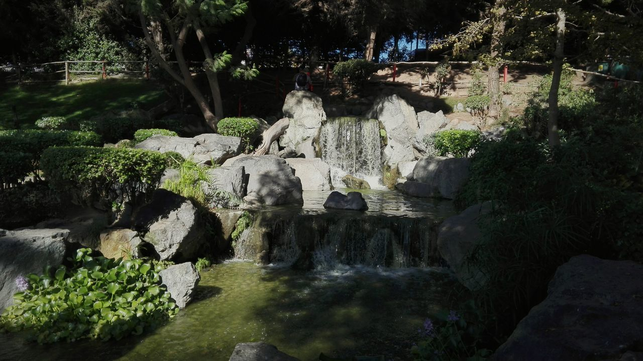 En una salida pueden pasar muchas cosas maravillosas... Parque Japonese Belleza Nature Tree Beauty In Nature Day Nature Green Colors Illuminated Tumblr Tranquility Chile Plant Flowers Park No People Outdoors