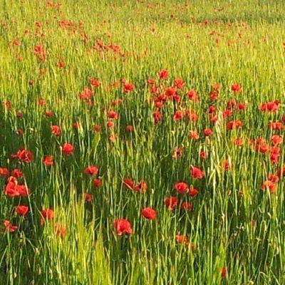Spring Android Flowers Instagramers Igersgirona igerscatalunya noedit nature ubiquography empordapower peace beautiful