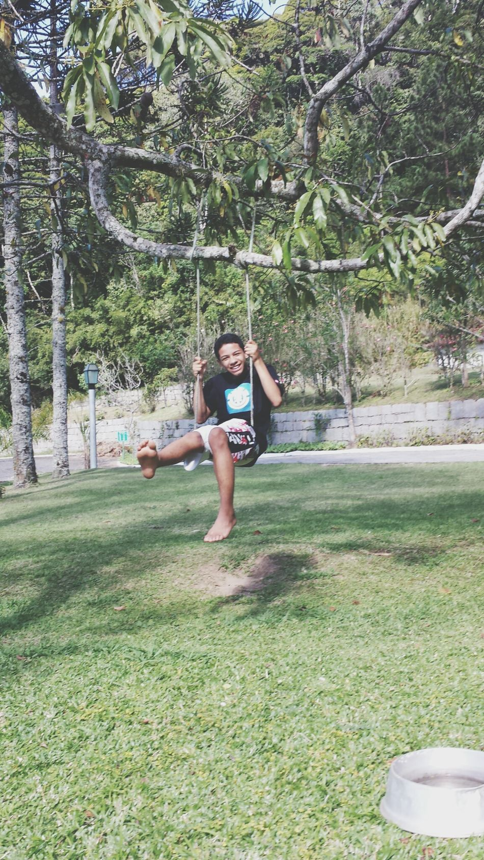 faça de árvores balanços !!!