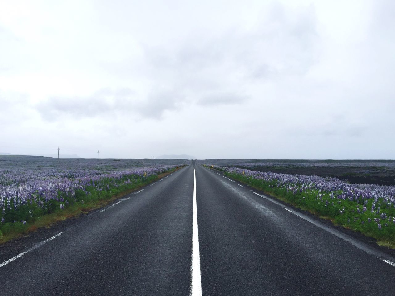 Nothing but you, me and these beautiful flowers Iceland Lupines Open Road Travel Travel Photography Travel Destinations Nature Road Road Trip On The Way
