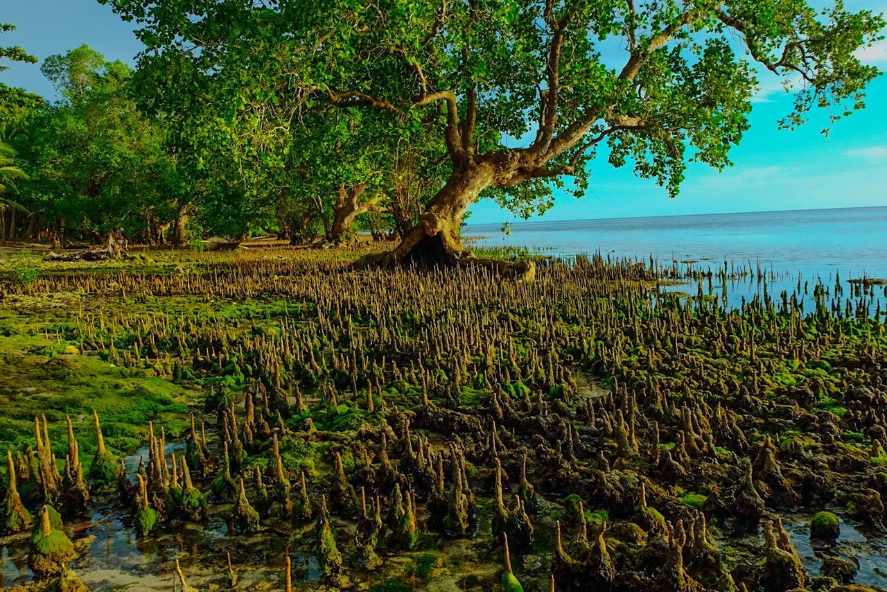 Mangrove Swamp Mangrove Life Mangroves Tree Nature Growth Sea Beauty In Nature Tranquility Scenics Tranquil Scene Water No People Idyllic Outdoors Landscape Beach Day Sky